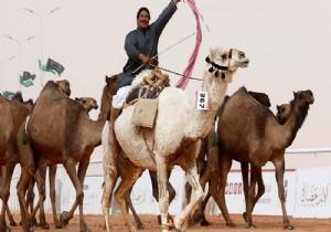 S. Arabistan çölünde 2 bin yıllık deve heykelleri keşfedildi