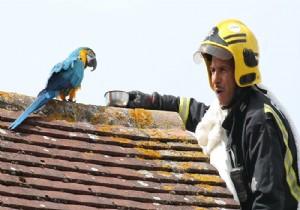 Papağan, kendisini kurtarmaya çalışan itfaiyecilere küfür etti