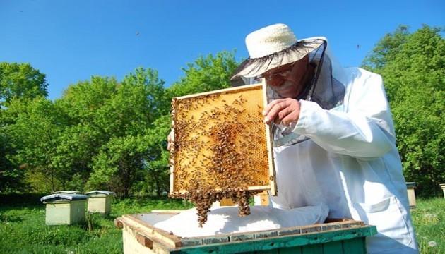 Kanser tedavisinde arı mucizesi!