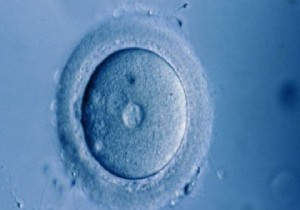 Bilim insanları ilk kez laboratuvarda insan yumurtası olgunlaştırdı