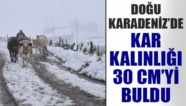 Doğu Karadeniz'in yüksek kesimlerinde kar kalınlığı 30 santimetreyi buldu!