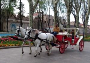Cumhurbaşkanı Erdoğan'dan hayvanseverlere müjde