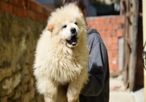 Sınırda yakalanan yavru köpekler açık artırmayla satılacak